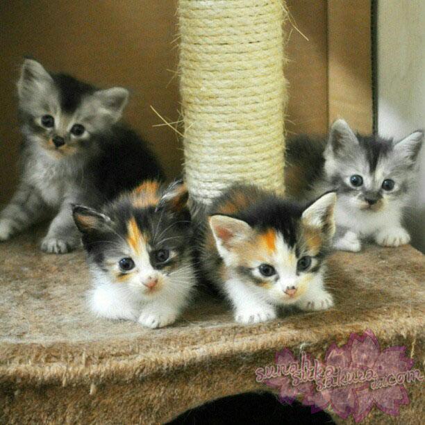 Rabu Yang Bisu: Tinny's Kittens