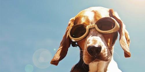 Protégez votre chien contre les rayons solaires