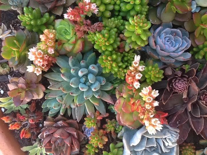 Plantas flores y velas para decorar para disfrutar - Composiciones de cactus ...