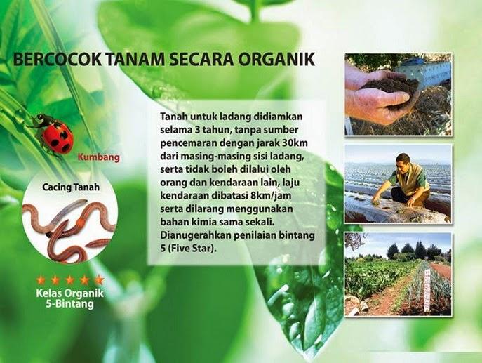 Cara Bercocok Tanam Sayur secara Organik yang Baik, Tanaman Organik Sayuran di Indonesia