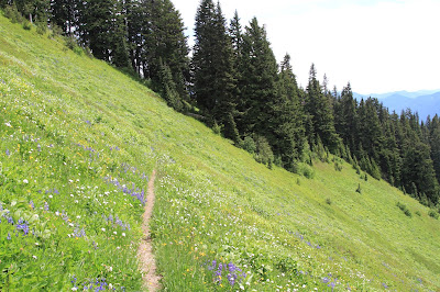 Trail Through a Meadow Heading East