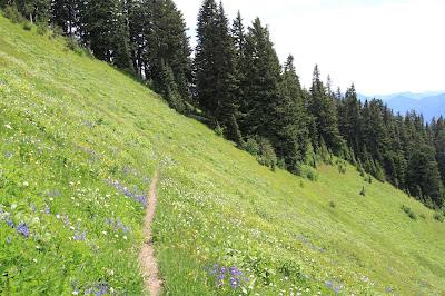 Trail Through a Meadow Heading East