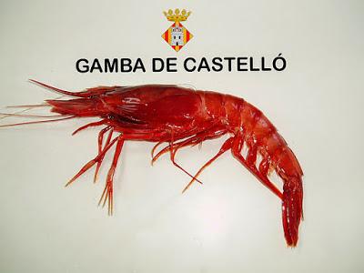 GAMBA ROJA DE CASTELLÓN