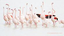 Coge unos prismáticos y una guía de aves y ven a visitarnos
