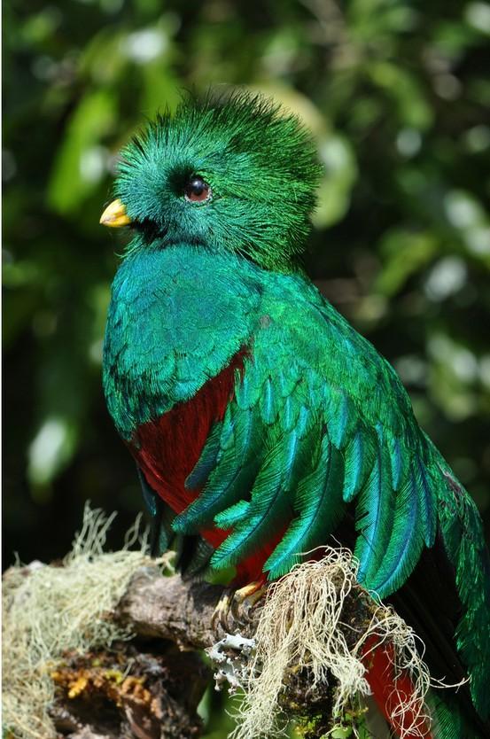 aves lindas