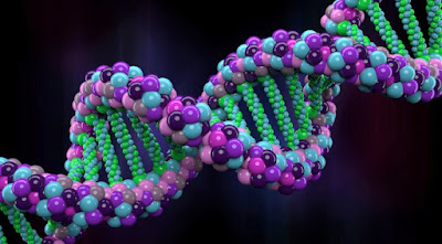 How Does DNA Repair Full Info Included By wiki