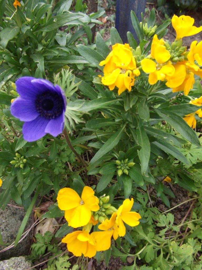 Le jardin du vent s 39 envoyer des fleurs for Envoyer des fleurs