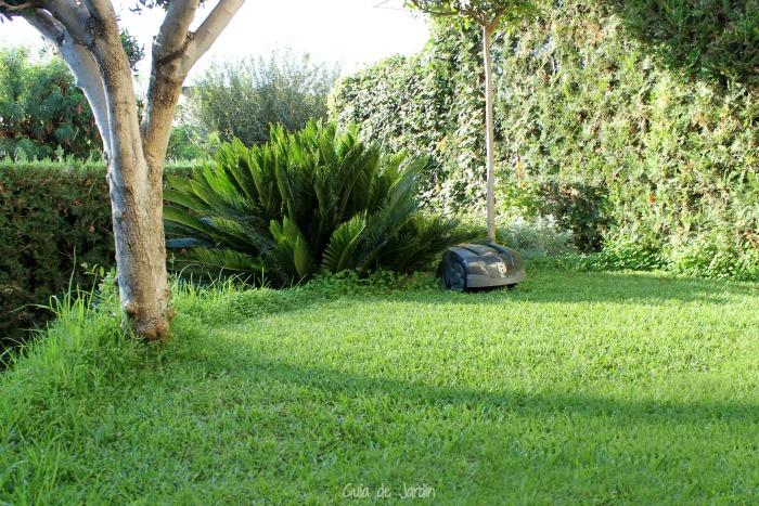 Eliminar los oxalis del c sped sin herbicidas guia de jardin for Como evitar que salga hierba en el jardin