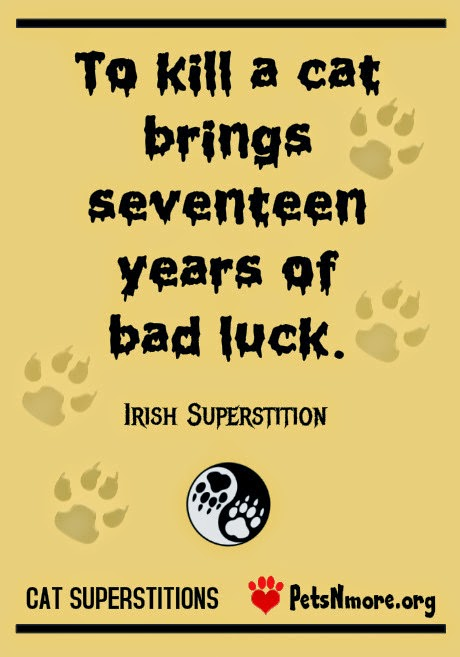 Pets N More Cat Superstitions