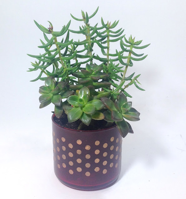 stenciled glass succulent planter lisa fulmer
