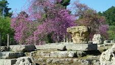 Arbres fleuris- site d'Olympie