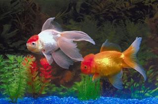 Funny Pictures Gallery Aquarium Fish Freshwater Aquarium