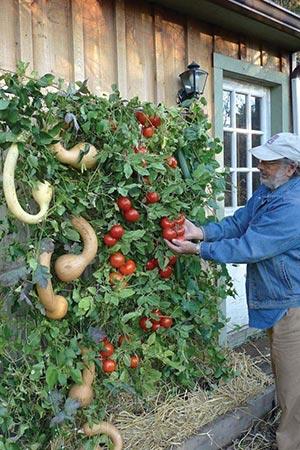 Musings of a Glamourpuss Vertical Gardening