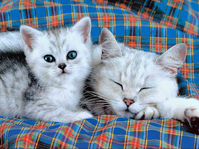 Funny Kittens Wallpaper Cute & funny kitten