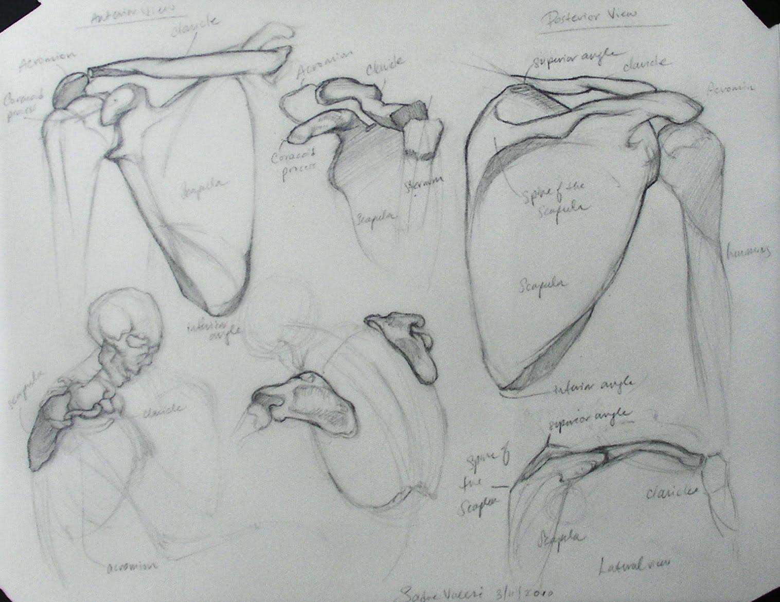 Figure Structure : January 2013
