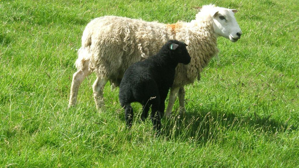 mum kids animals - photo #36