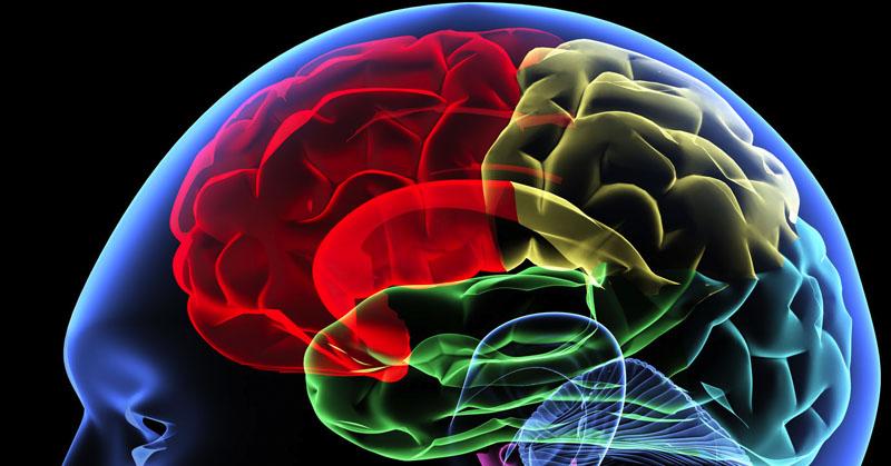Rahasia Otak Manusia yang Belum Terungkap