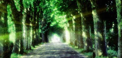 Lighted tree pathway, green, forest