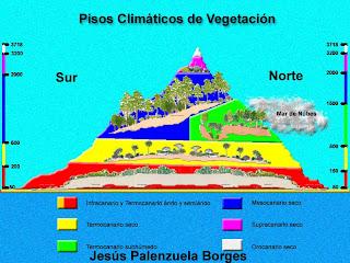 Jesus palenzuela borges pisos de vegetaci n de las islas for Pisos de vegetacion canarias