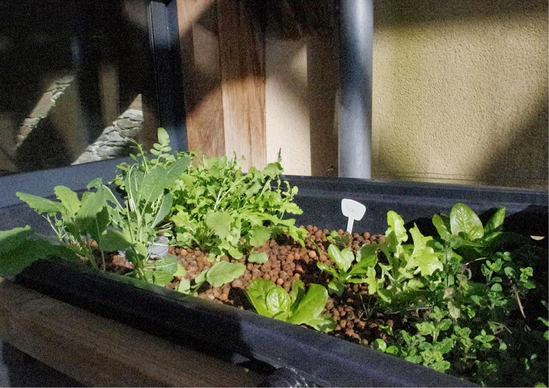 aquaponie B.ponics salade billes argile kale menthe fraise auto siphon aquaponie france diy aquaponics