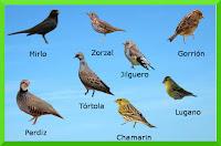 Aviturismo-málaga, aves en malaga, pájaros en la axarquia, pájaros en comares