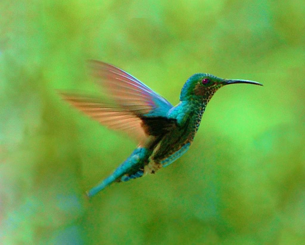 beautiful birds images download