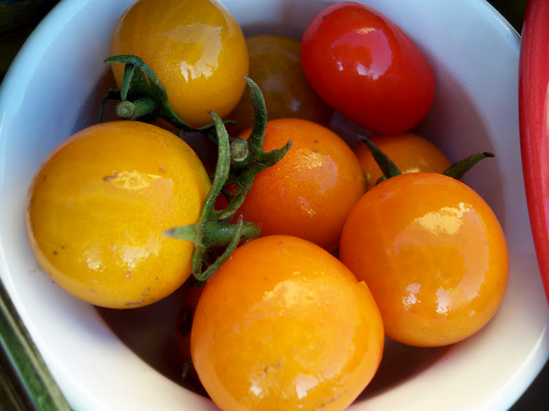farm fresh organic grape tomatoes