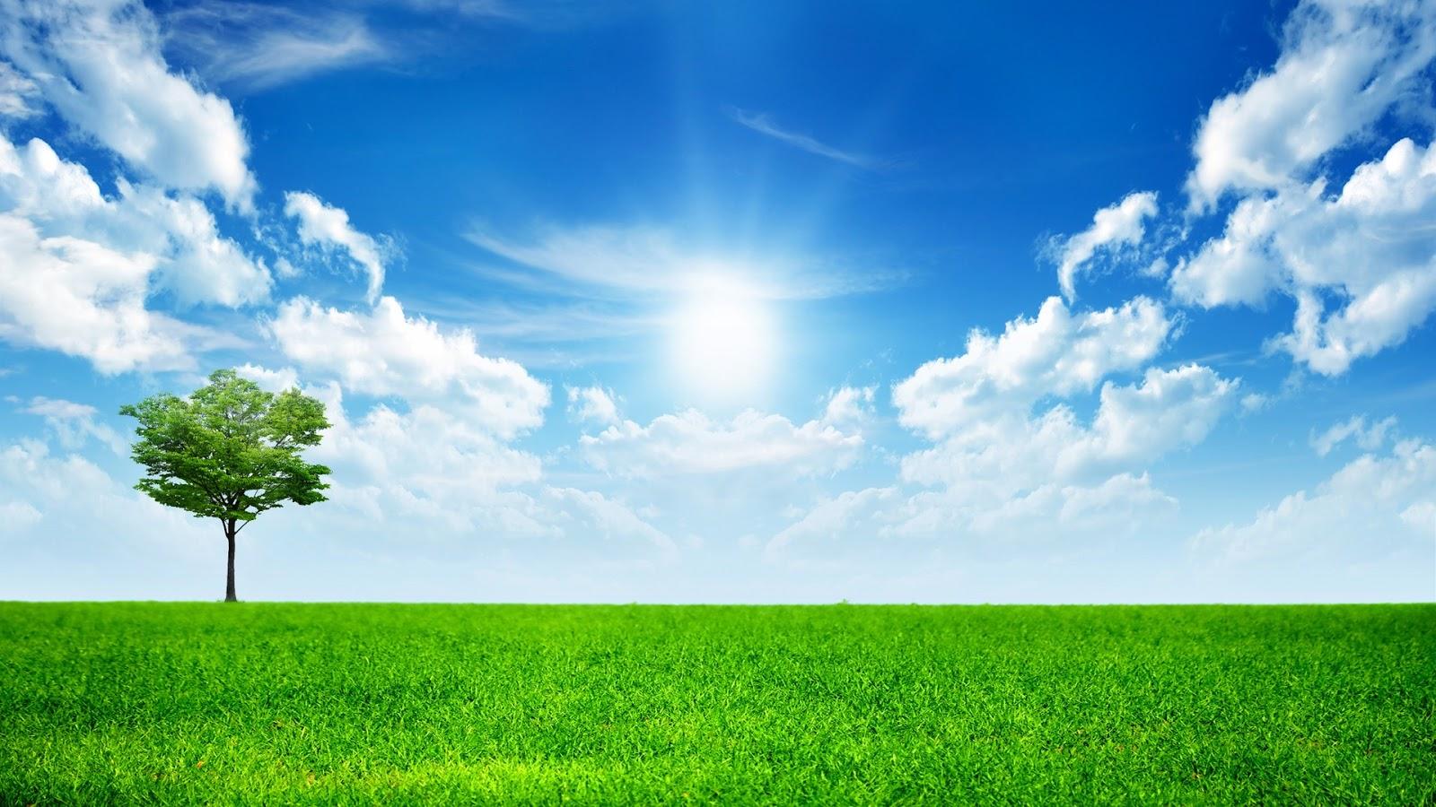 Latest Hd Wallpapers Green Grass 1080p Hd Wallpaper
