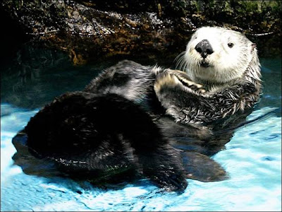 Sea-Otters