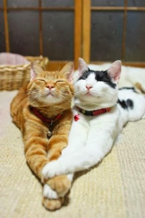 Schneemari  Sch U00f6ne Katzen
