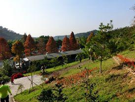 Grassland of Rhinoceros Beetle Farm in Chiayi Taiwan
