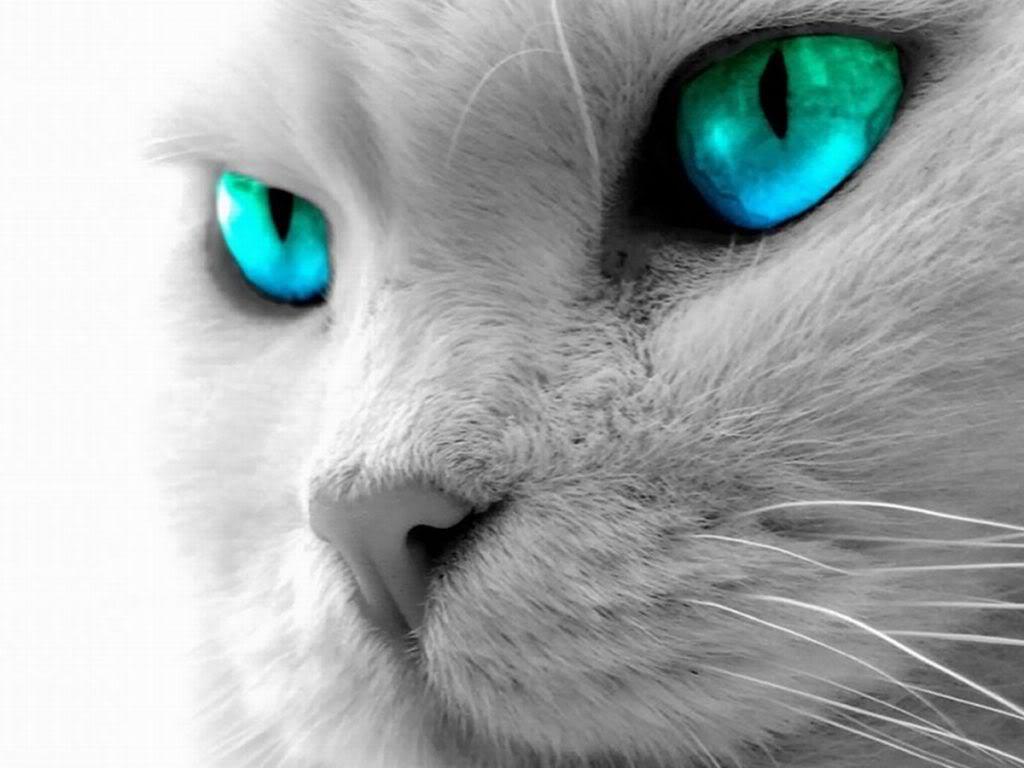 http://3.bp.blogspot.com/-BRZHYW8TgpQ/UEf3bP3FXsI/AAAAAAAAB1g/JMYFgotnwAU/s1600/cat%2Beyes%2Bwallpapers%2B2.jpg