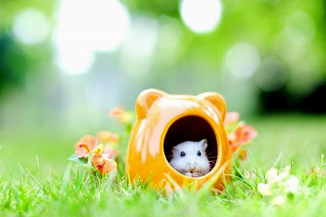 Cute and funny pictures of hamsters 2