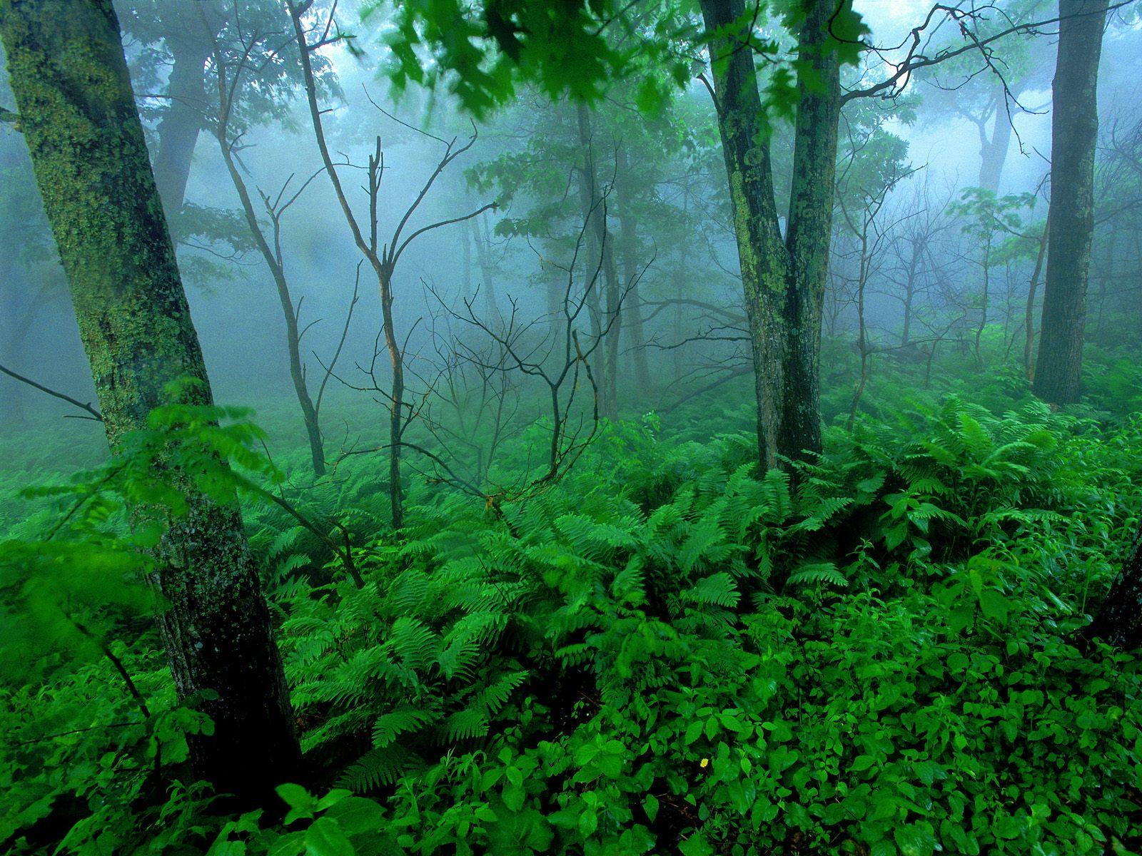 ... в блоге опубликовать в twitter: vlifefoto.blogspot.ru/2012_11_01_archive.html