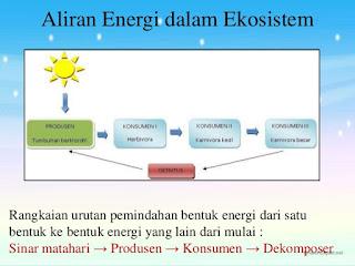 aliran energi dalam ekosistem adalah