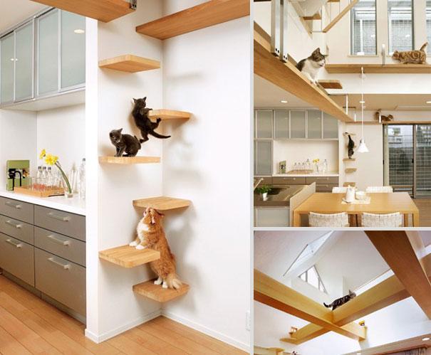 Como deixar sua casa mais confortavel e divertida para seus gatos: Prateleiras para gatos fazerem parkour