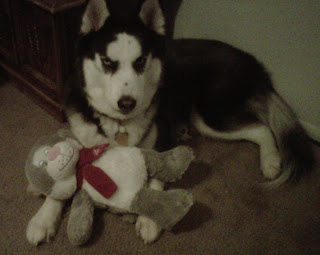 Kita cuddles with his Christmas gift.