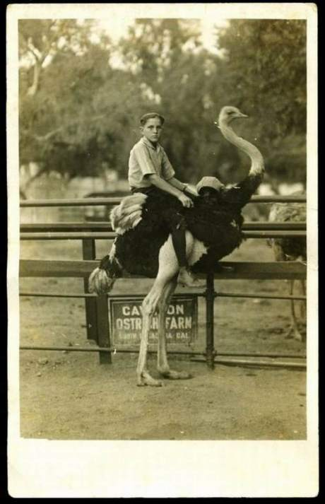 vintage funny picture