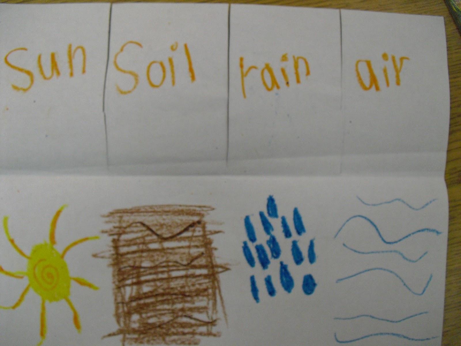 mrs cates 39 kindergarten plants. Black Bedroom Furniture Sets. Home Design Ideas