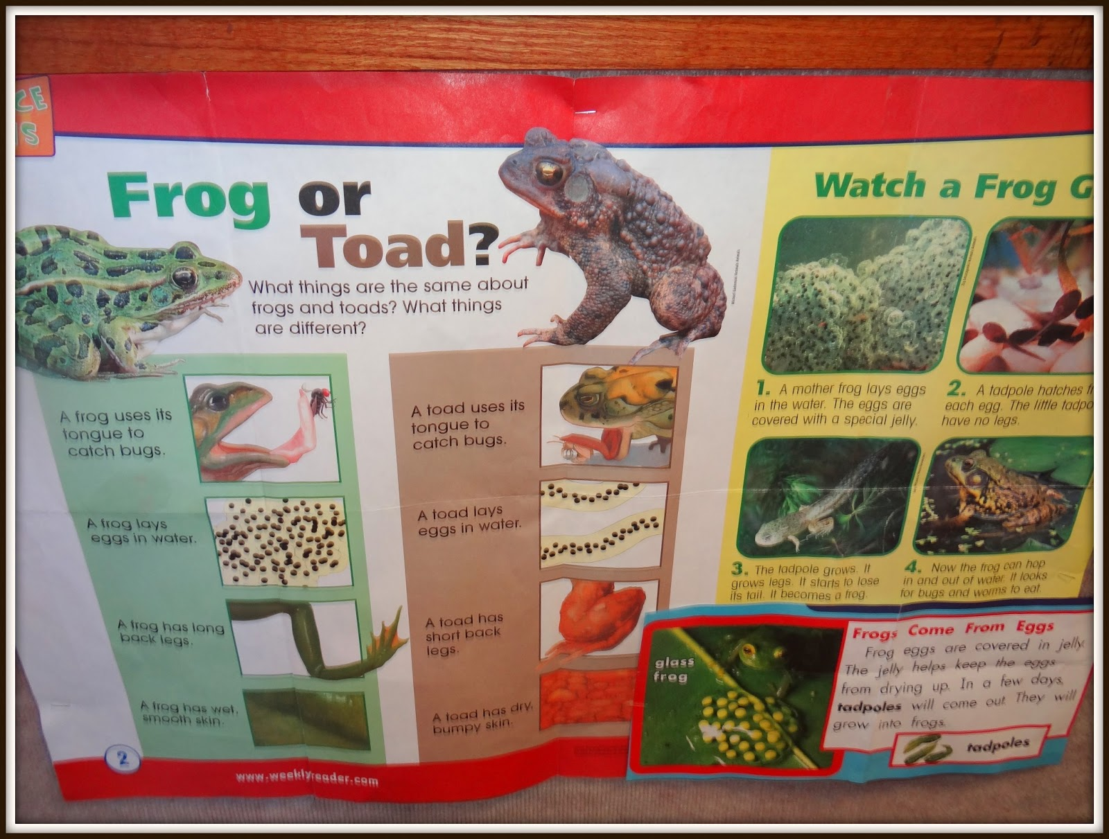frog toad compare contrast essay Essayed verbiage essay on social media effect on journalism 4 p s of colgate essays on global warming essay for ias mains 2016 movies essay for ias mains 2016 movies.