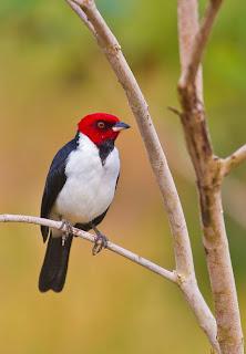Aves exóticas del paraíso en el bosque del edén