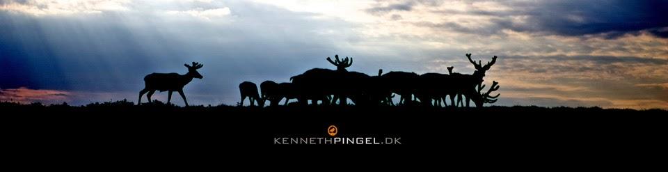 Kenneth Pingel´s Fotoblog