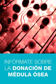 INFÓRMATE SOBRE LA DONACIÓN DE MÉDULA ÓSEA