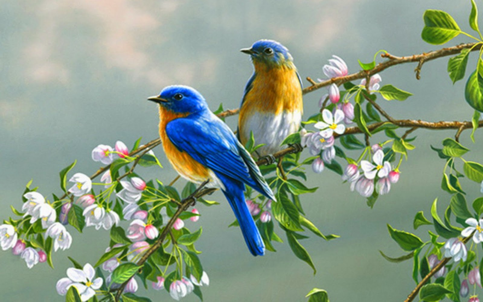 hd birds wallpapers for desktop get for free get for free