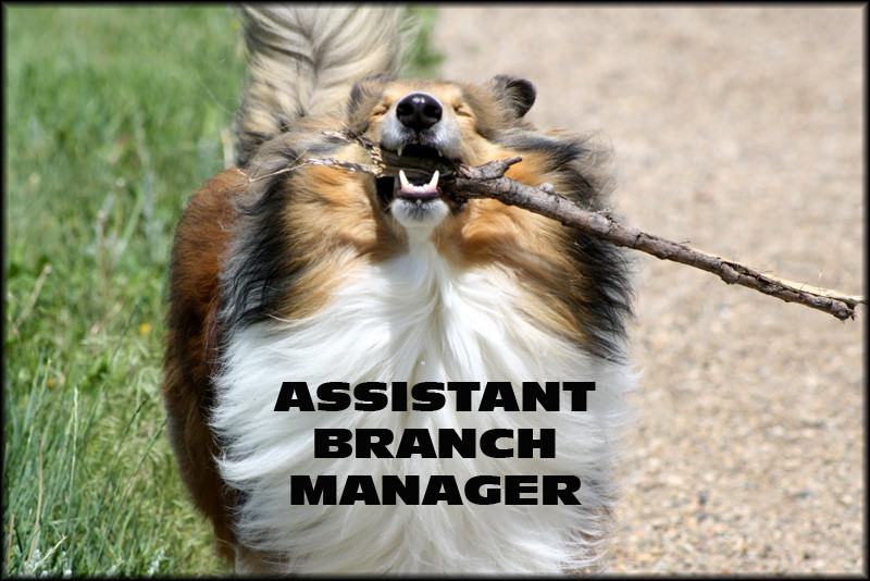 My Assistant Branch Manager Dog