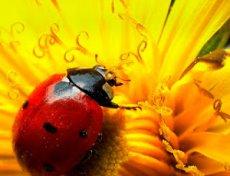 Fauna Auxiliar: Marietes