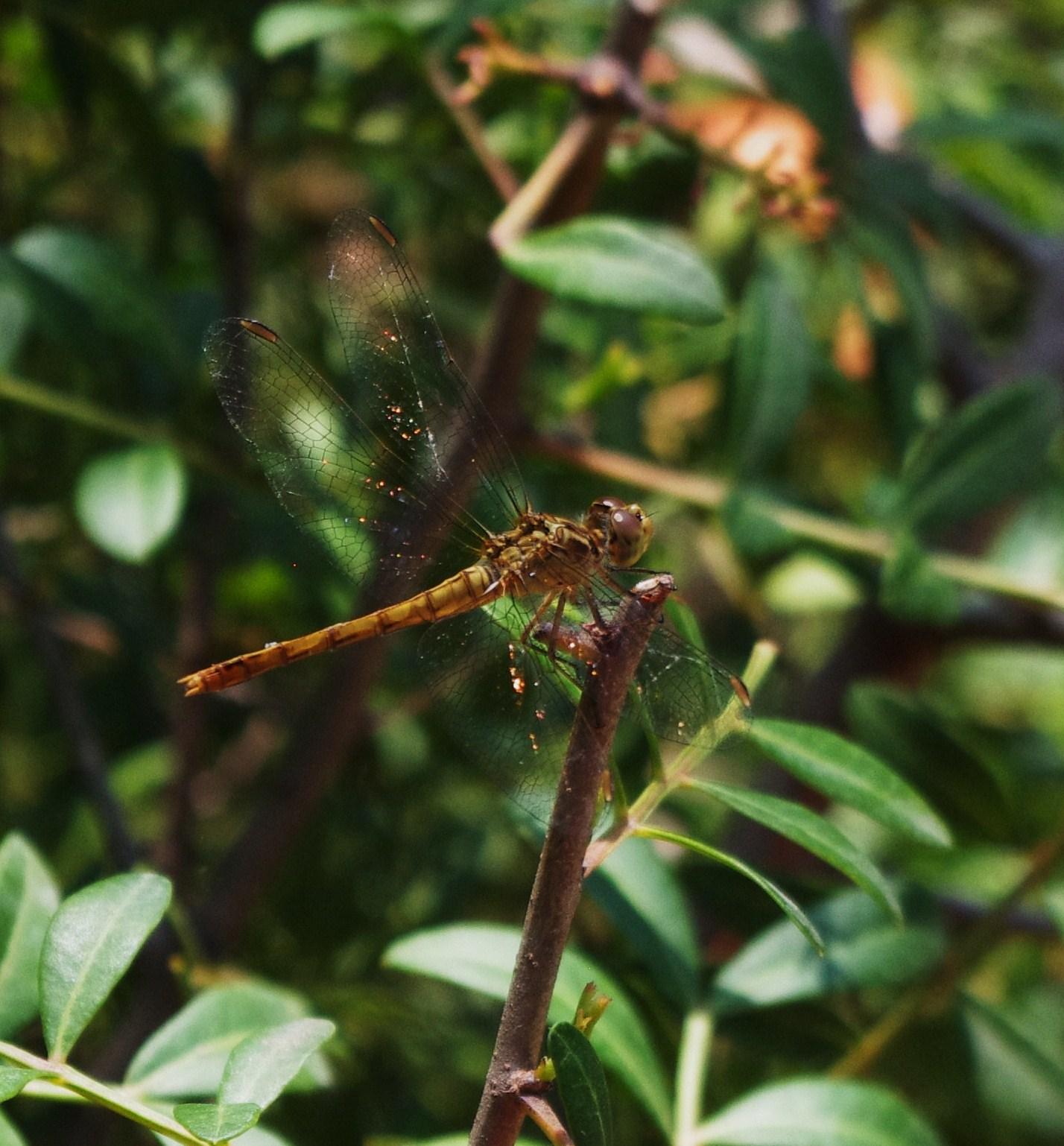 Le jardin des couronnes la faune du jardin olbius riquier for Jardin olbius riquier
