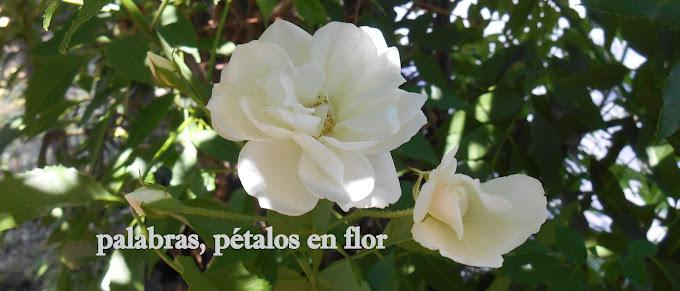 palabras, pétalos en flor