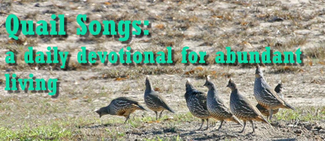 Quail Songs: A Daily Devotional for Abundant Living