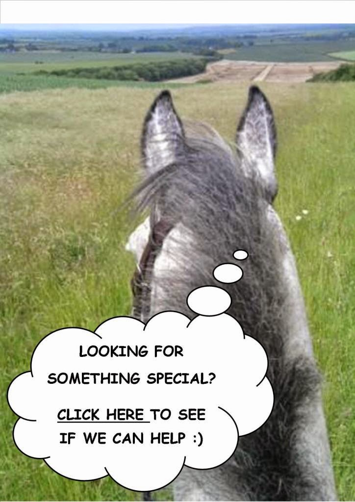 Want to inquire about horses for sale?